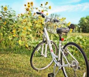 luetetsburg-lodges_aktivitaeten_bicycle-871265