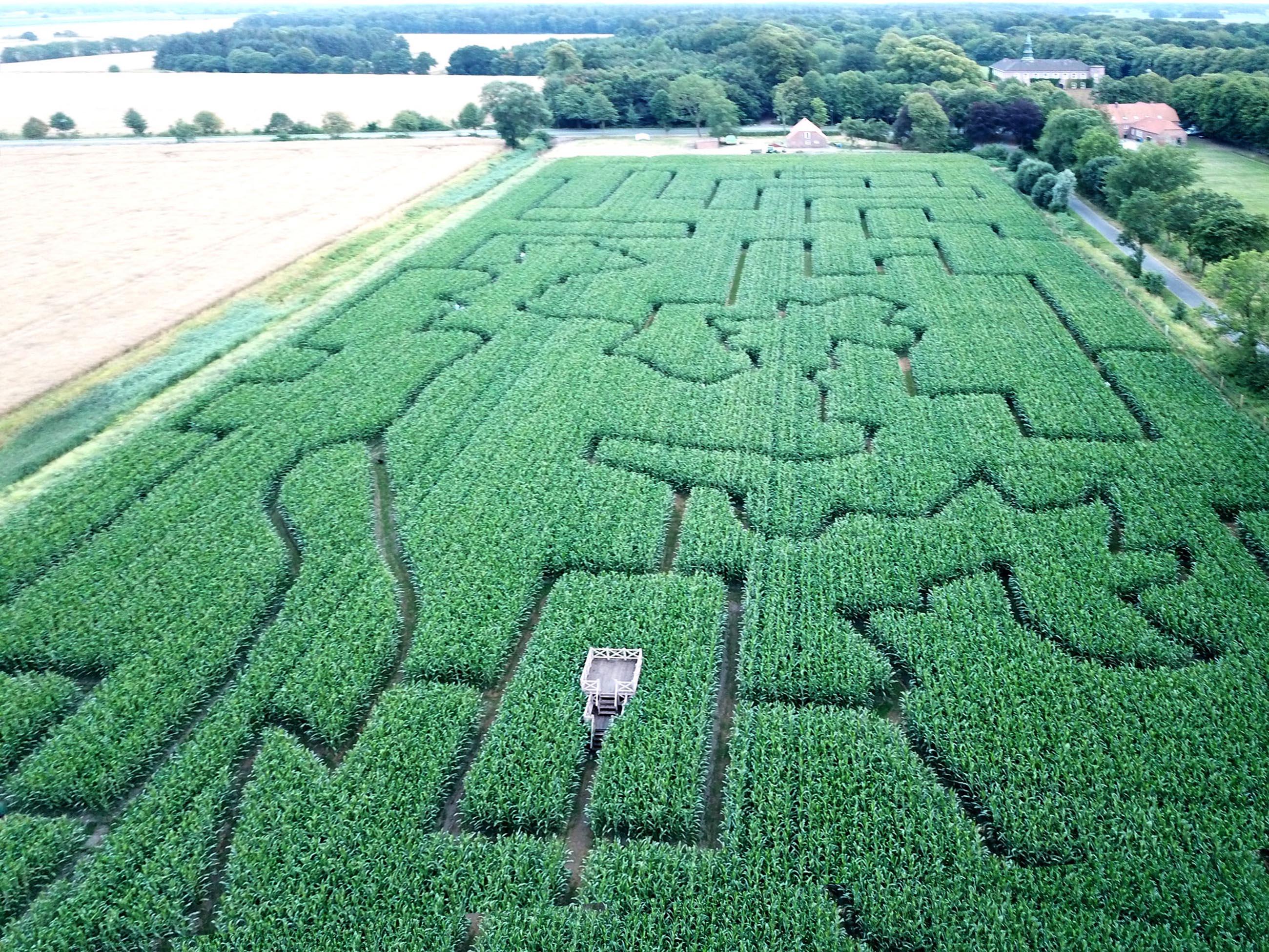 Lütetsburger Maislabyrinth